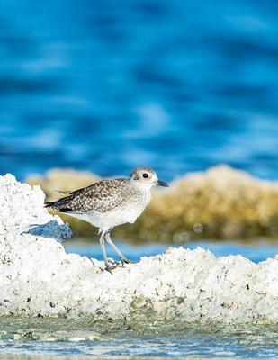 Bird_Salton_Sea_2015_2