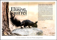Full article: https://www.dawnwilsonphotography.com/co_outdoors_abertssquirrels_small.pdf