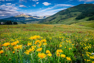 Crested_Butte_Wildflowers_2019_1