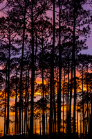 Cypress_trees_BBMNWR_2020_1