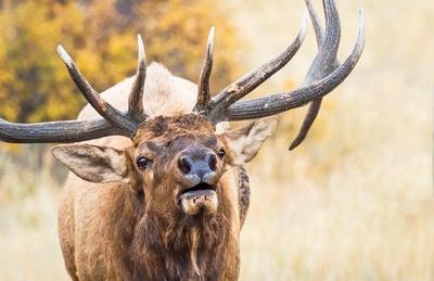 Elk_RMNP_2016_16