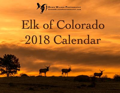 Elk_RMNP_2017_1