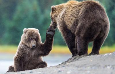 Brown_Bear_LC_10