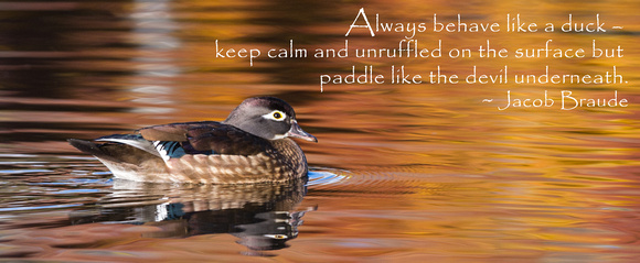 Dawn Wilson Photography Inspirational Quotes Paddling Like A Duck