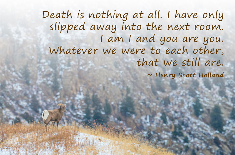 Coping With Death Quotes Amusing Dawn Wilson Photography  Inspirational Quotes  Death Is Nothing