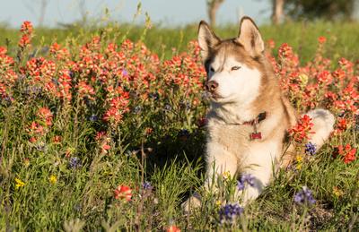 Sage_widlflowers_Texas_1